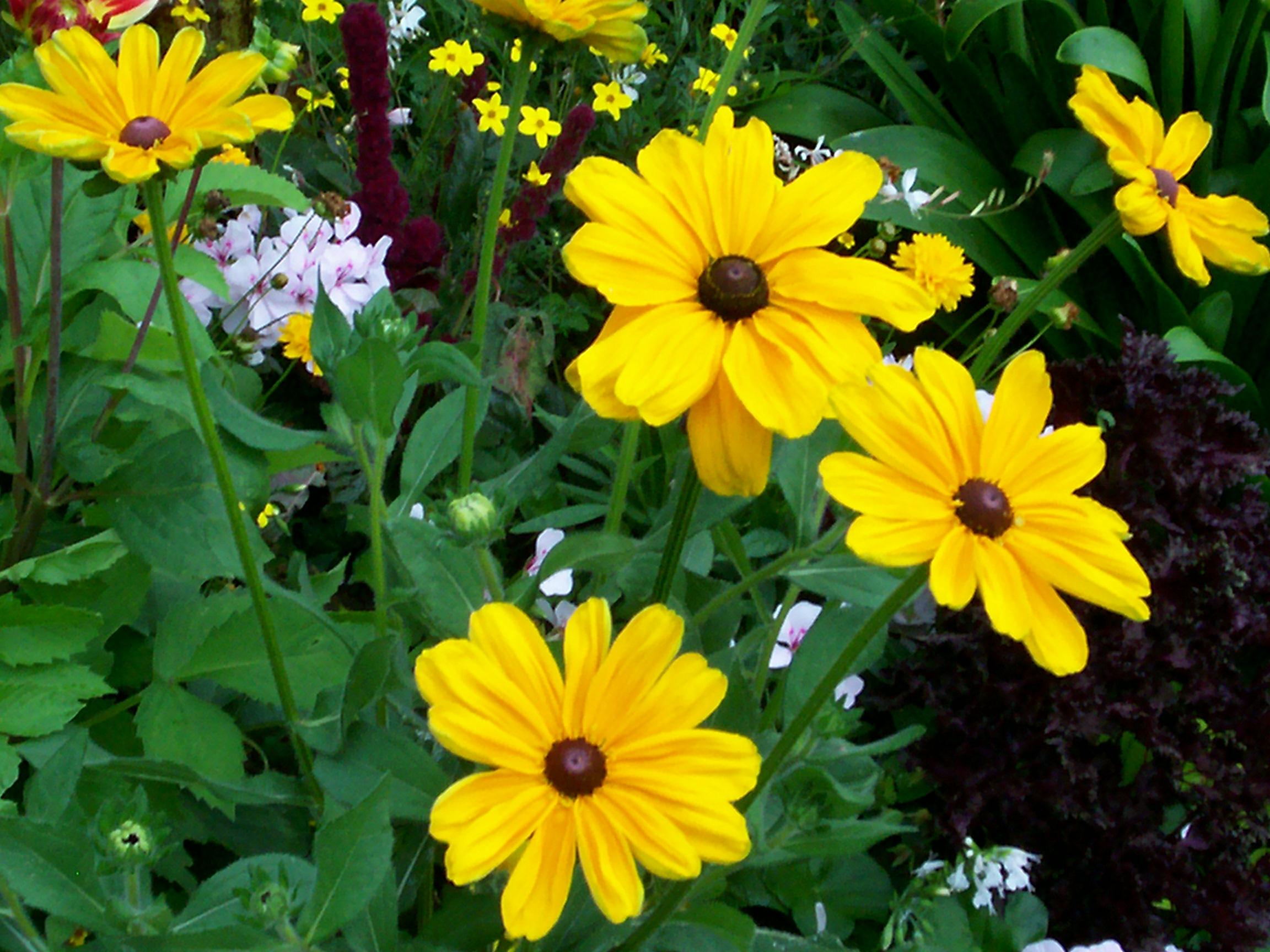 Quelques fleurs de mon jardin pour vous for Jardin pour vous