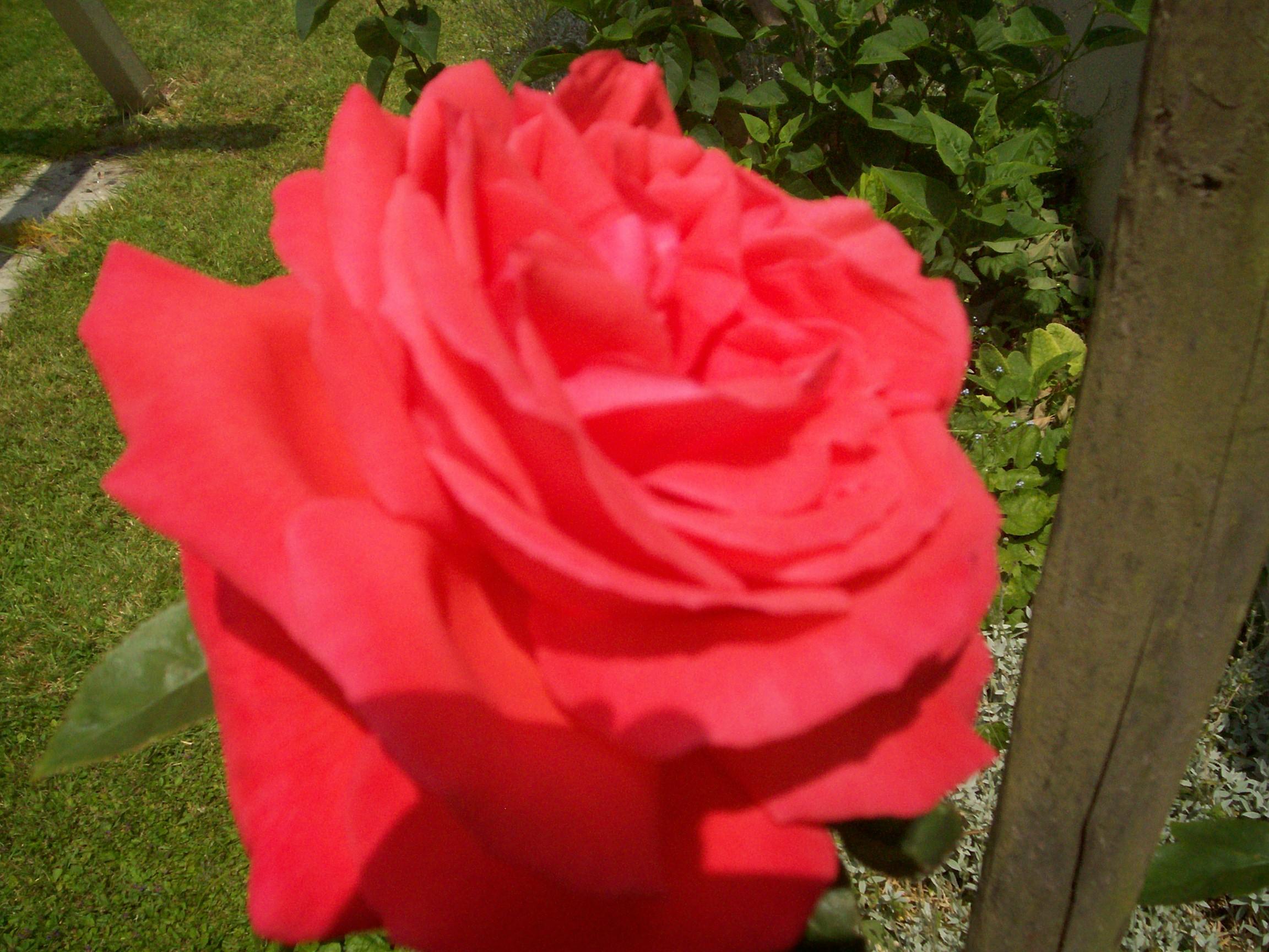 Jardin et fleurs 2014pour vous page 2 for Jardin pour vous