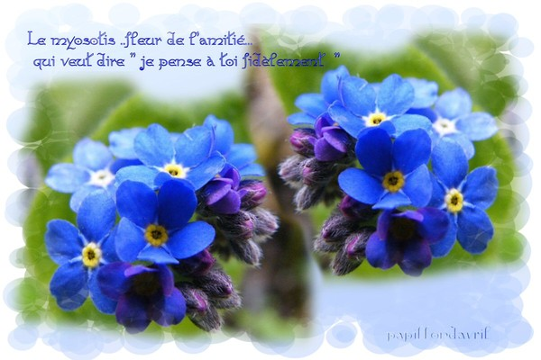 Fleurs de l 39 amiti - Langage des fleurs amitie ...
