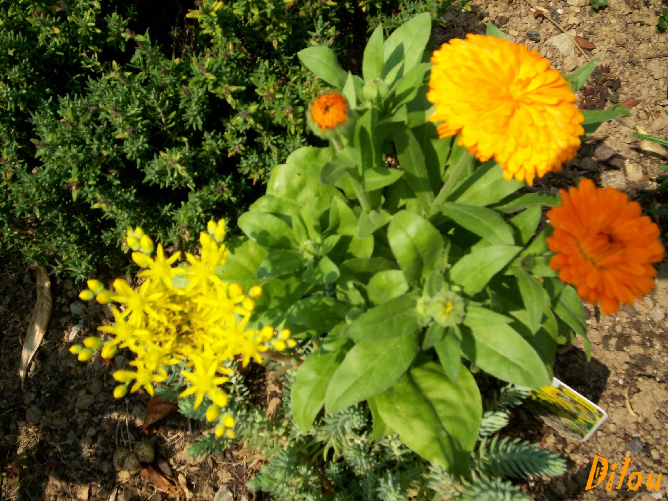 Jolies fleurs de mon jardin pour vous for Jardin pour vous