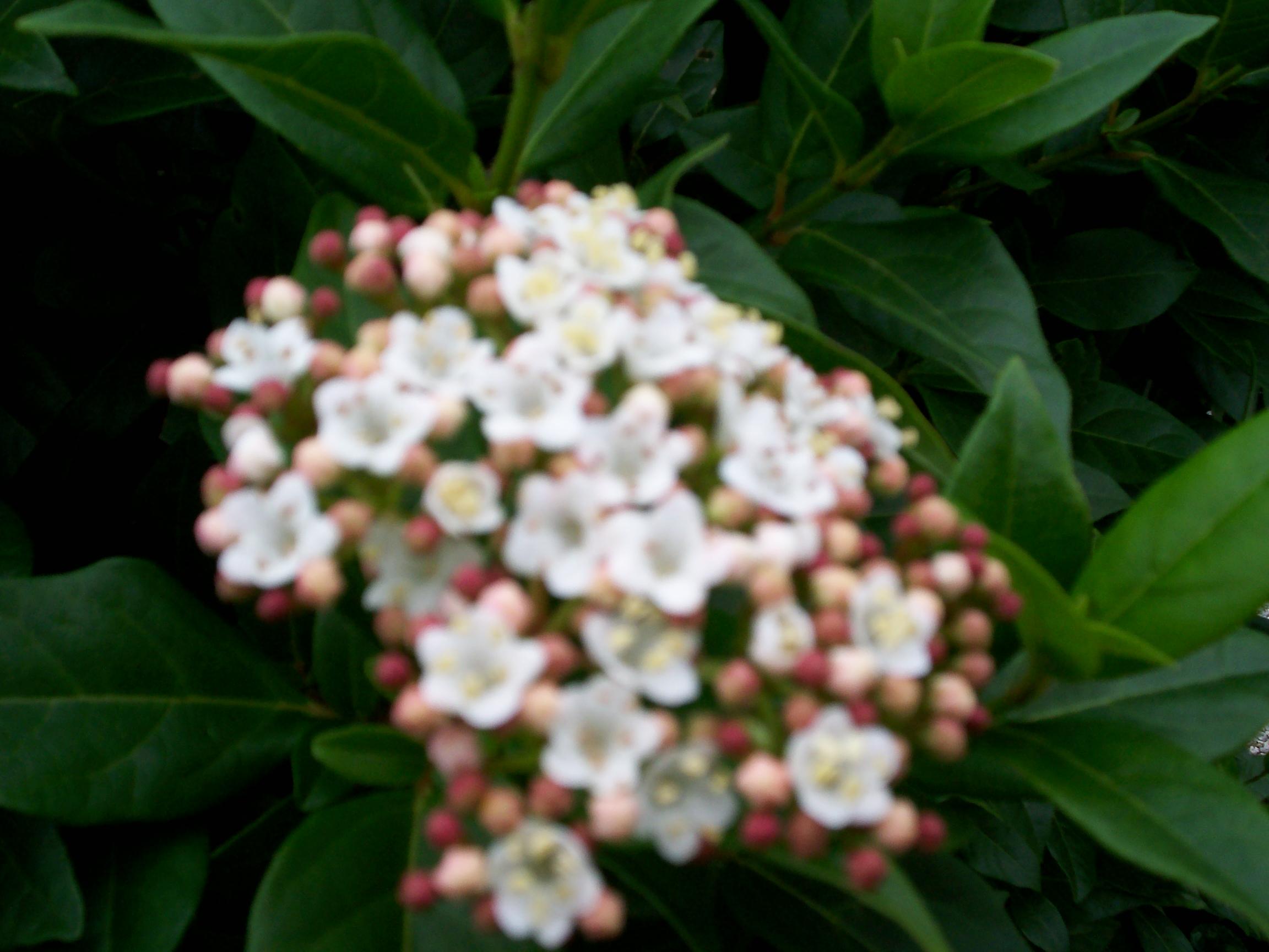 Jardin et fleurs 2014pour vous for Jardin 04200