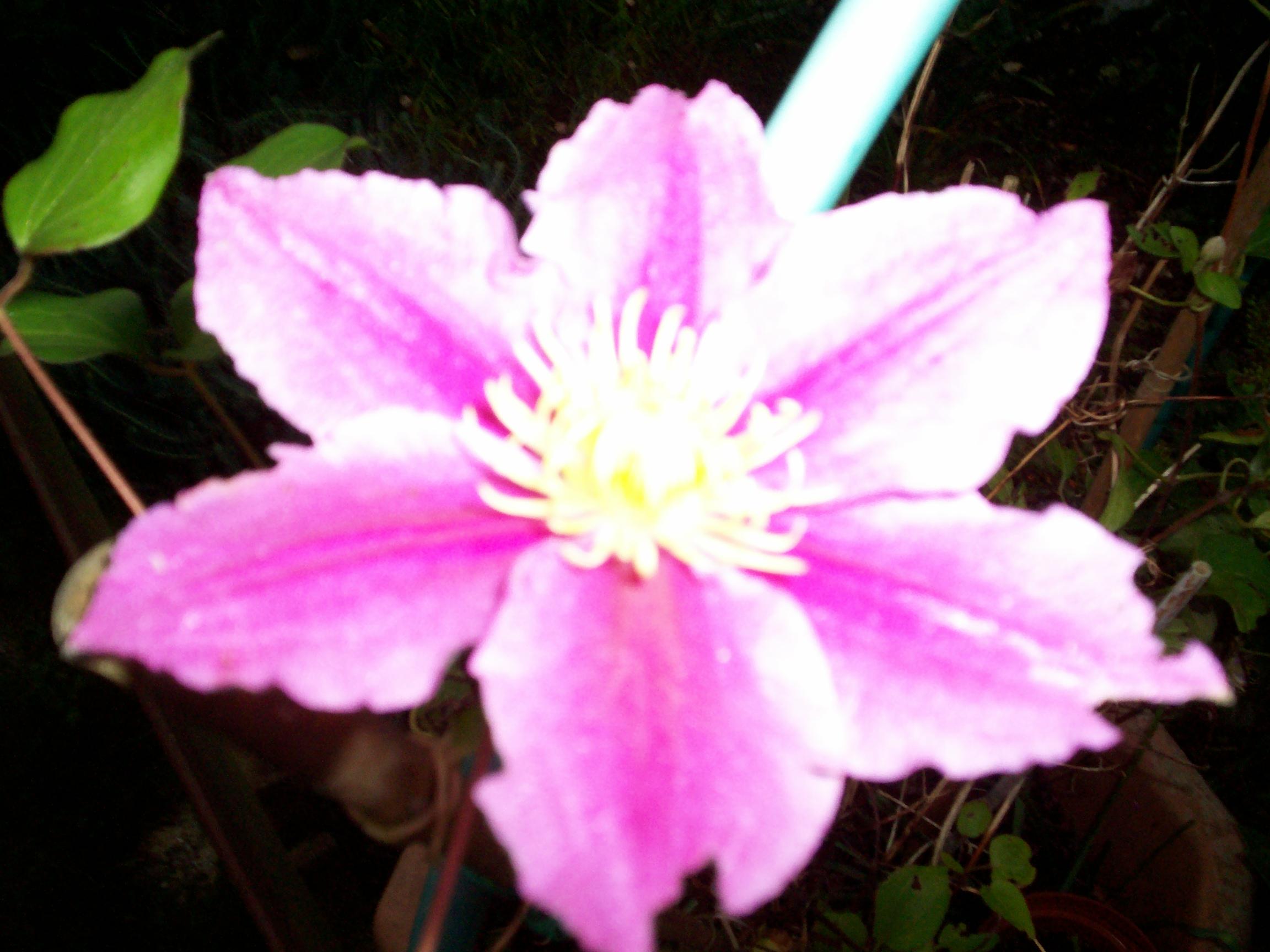 Jardin et fleurs 2014pour vous for Jardin et vous