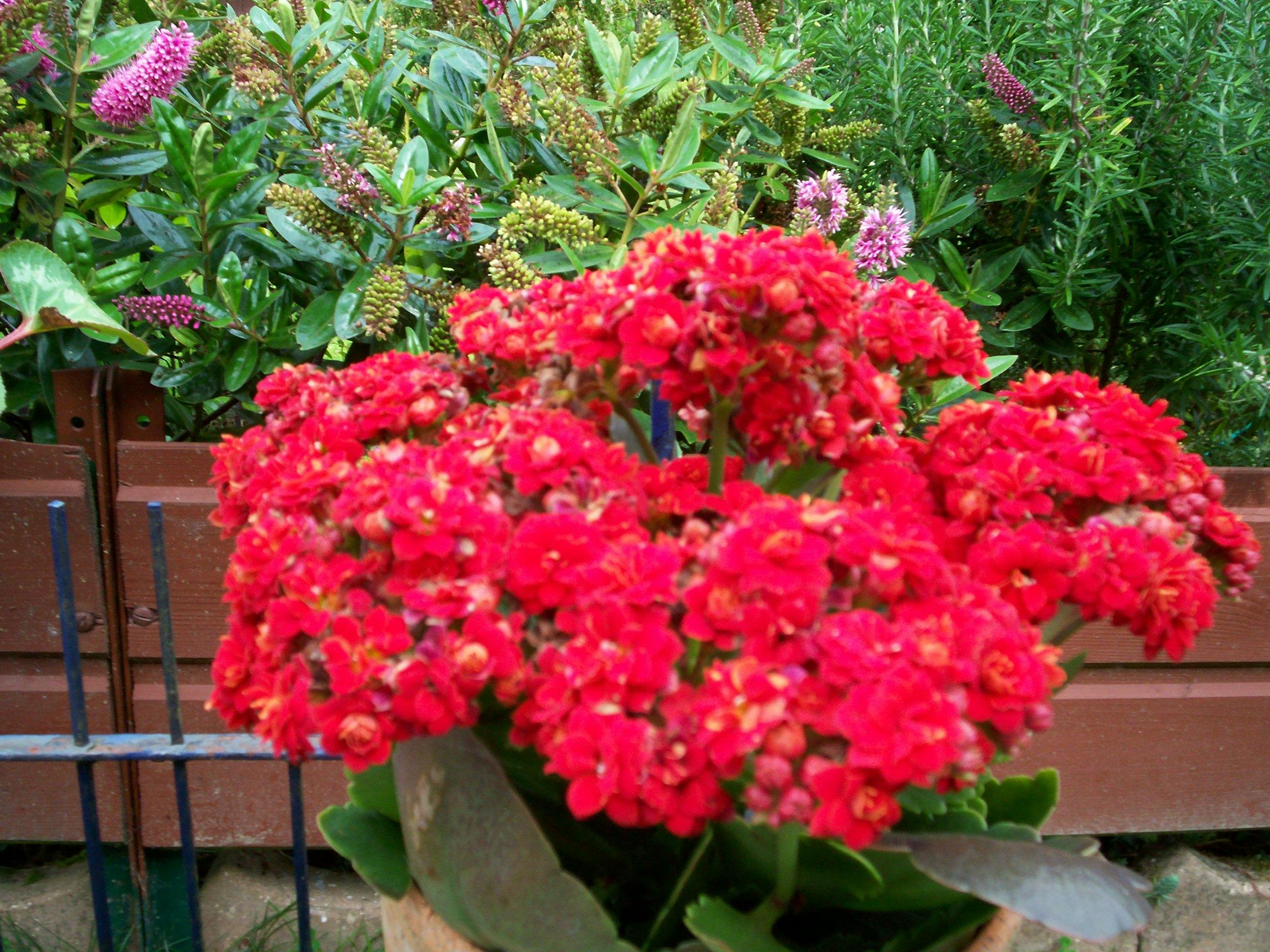 Bonne soiree avec une tite fleur de mon jardin pour vous for Jardin pour vous